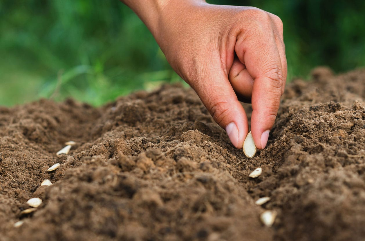Bulk-seeds